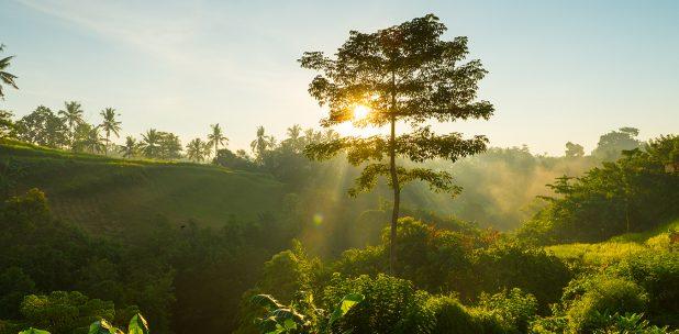 Според изследователи природата трябва да бъде в основата на икономиката - кръгова биоикономика на благосъстоянието